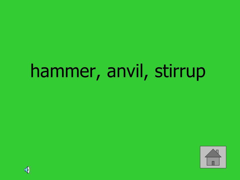 hammer, anvil, stirrup