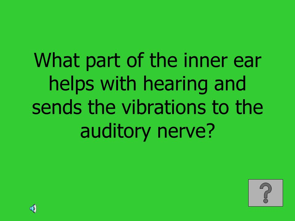 What part of the inner ear helps with hearing and sends the vibrations to the auditory nerve