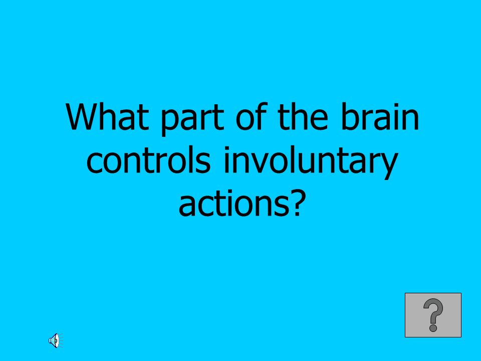 What part of the brain controls involuntary actions