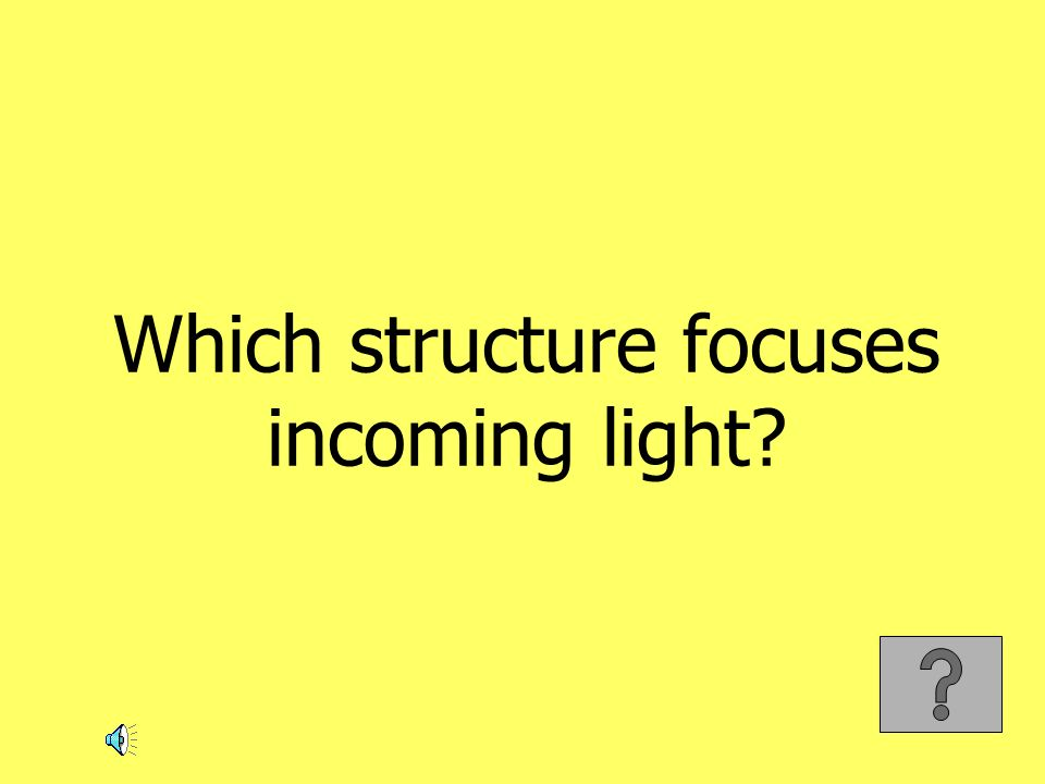 Which structure focuses incoming light