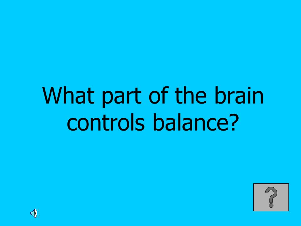 What part of the brain controls balance