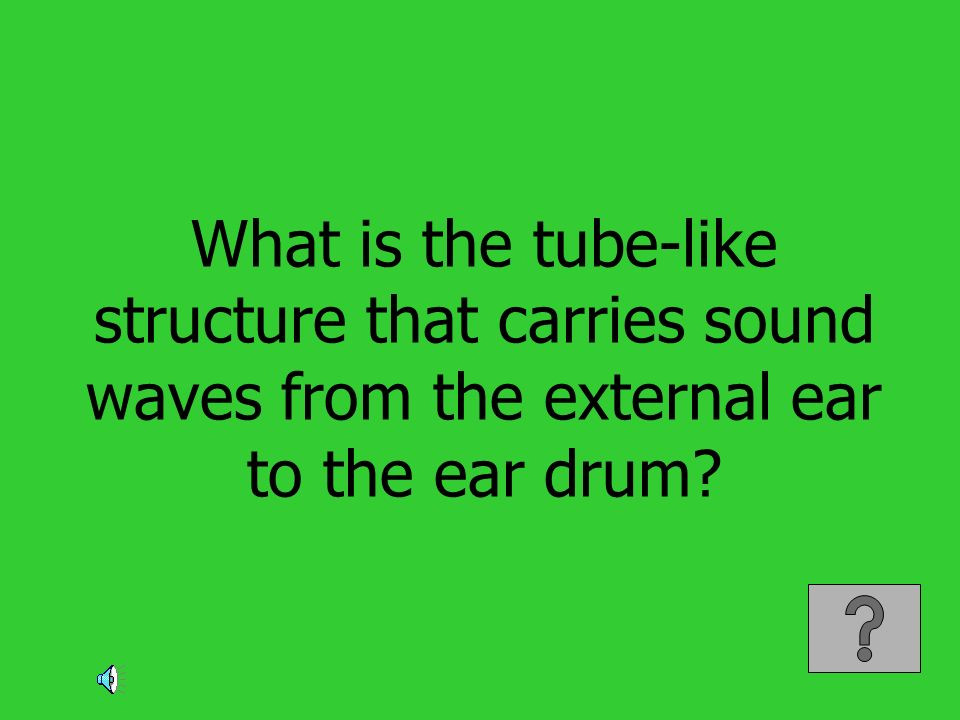 What is the tube-like structure that carries sound waves from the external ear to the ear drum