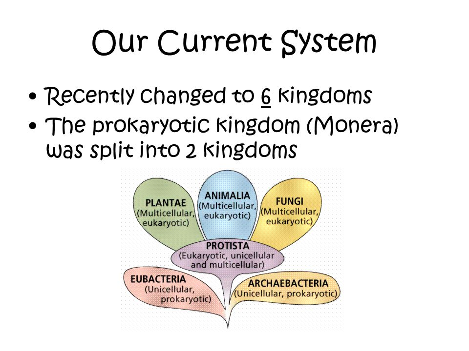 Our Current System Recently changed to 6 kingdoms