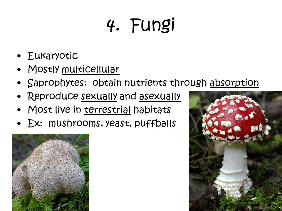 4. Fungi Eukaryotic Mostly multicellular
