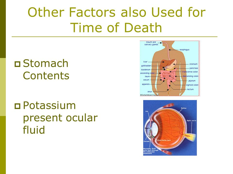 Other Factors also Used for Time of Death