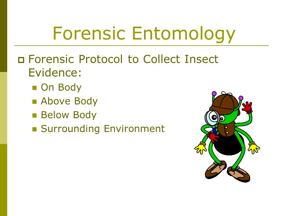 Forensic Entomology Forensic Protocol to Collect Insect Evidence:
