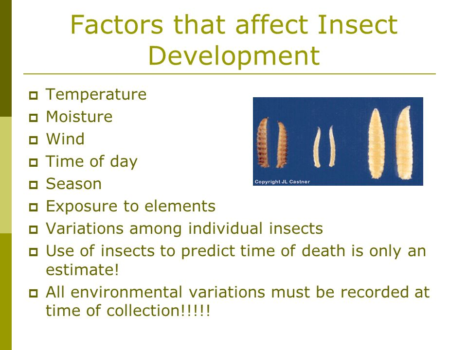 Factors that affect Insect Development