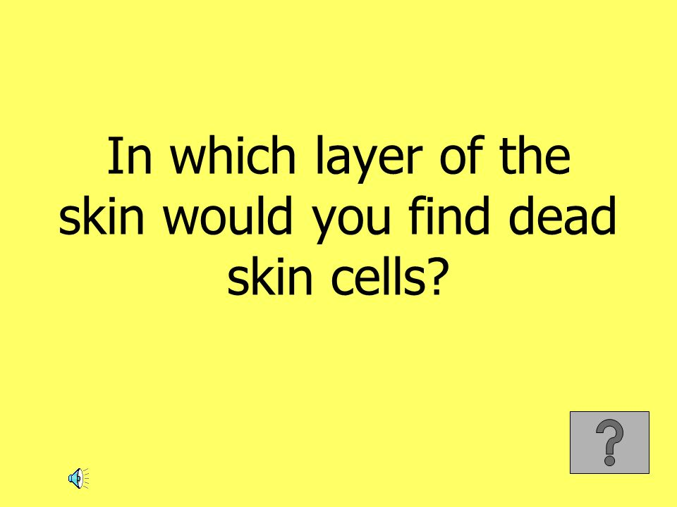 In which layer of the skin would you find dead skin cells
