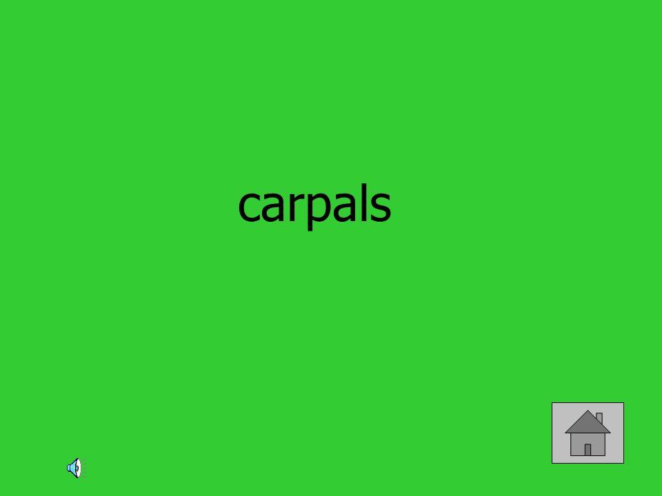 carpals