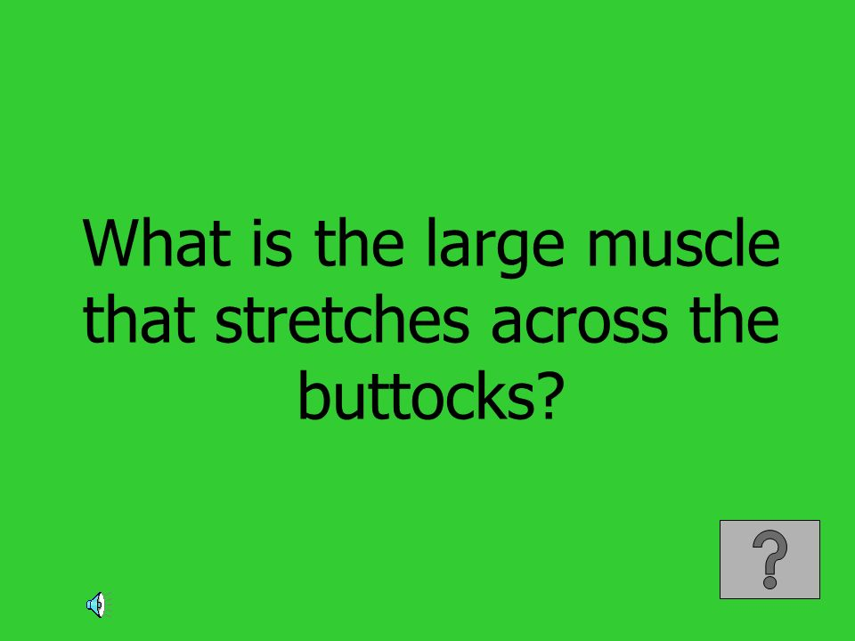 What is the large muscle that stretches across the buttocks