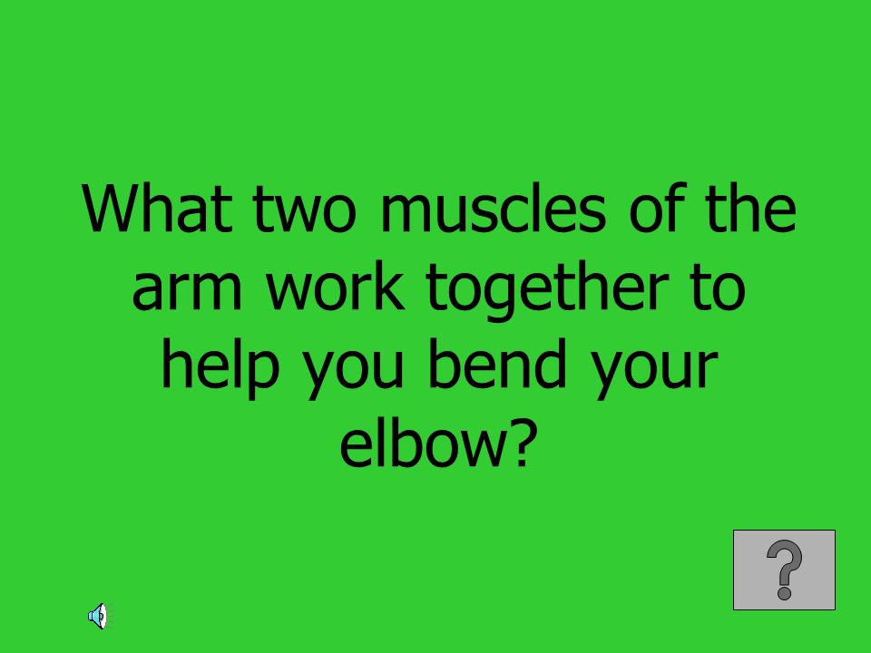 What two muscles of the arm work together to help you bend your elbow