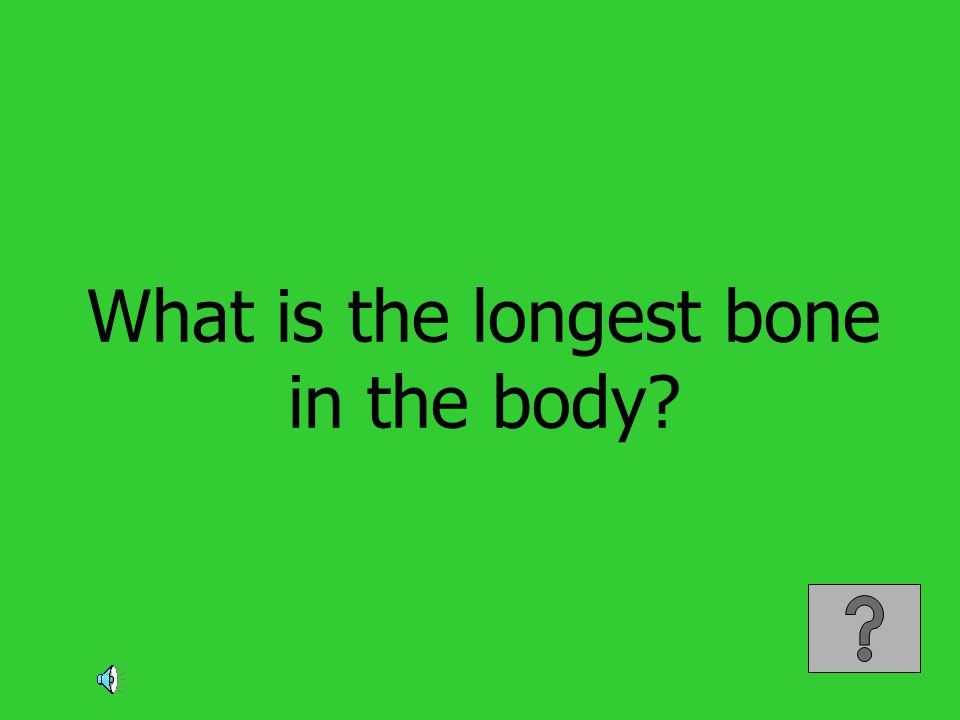 What is the longest bone in the body