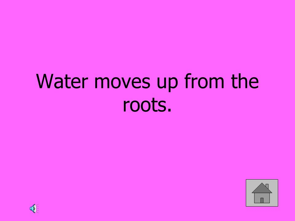 Water moves up from the roots.