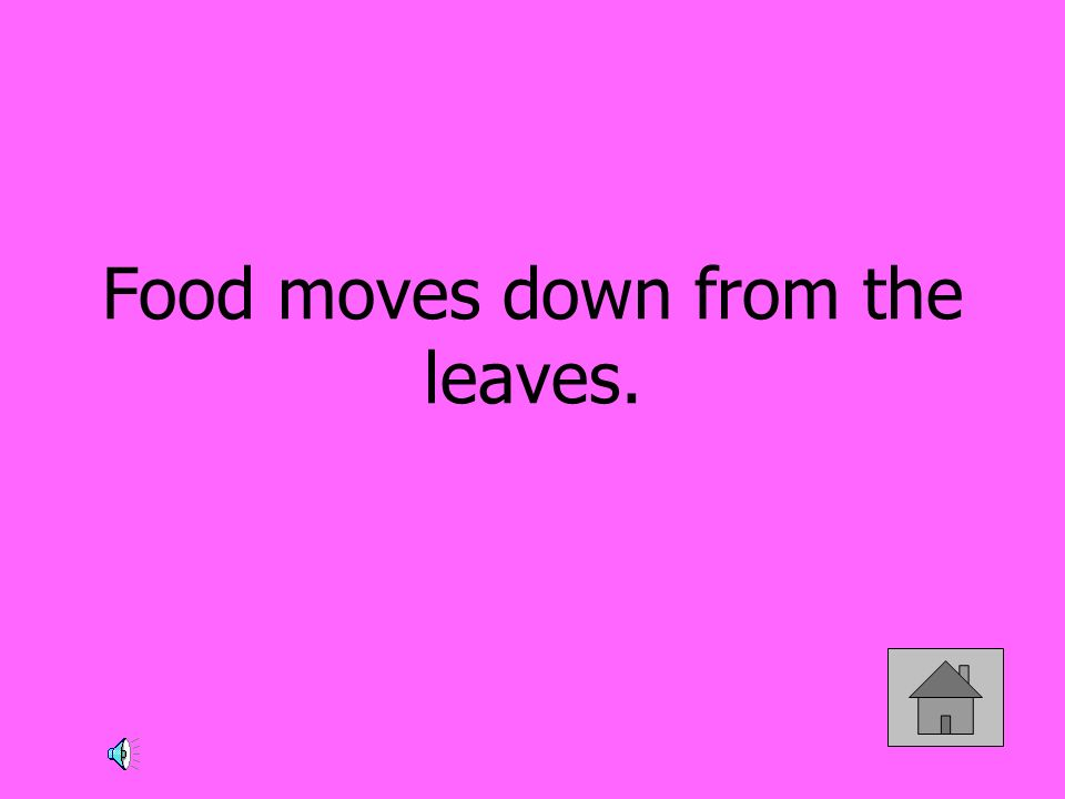 Food moves down from the leaves.
