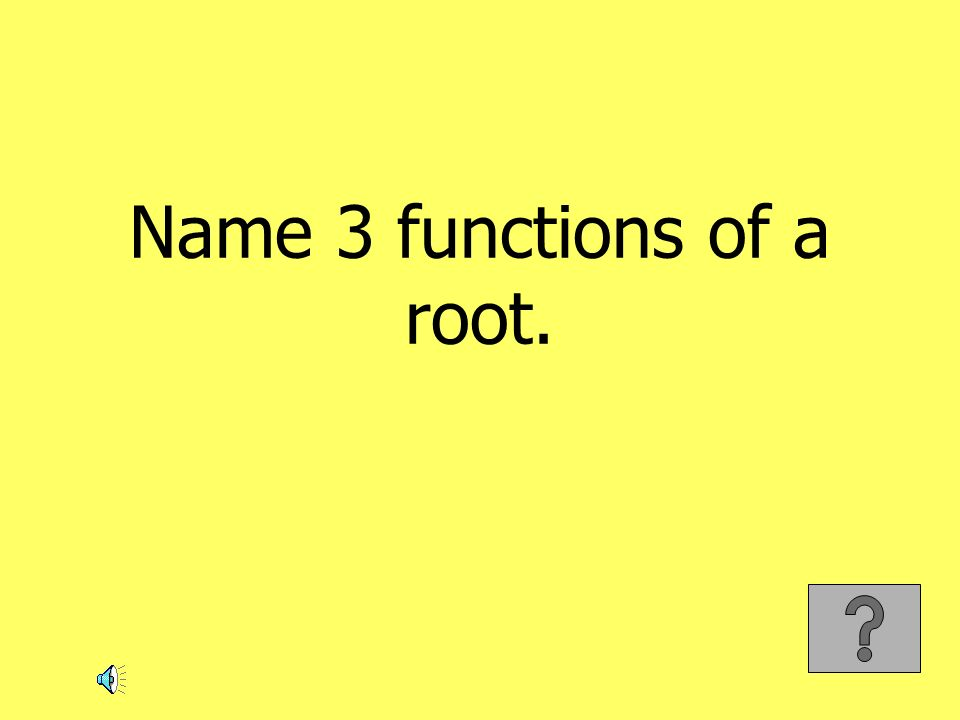 Name 3 functions of a root.
