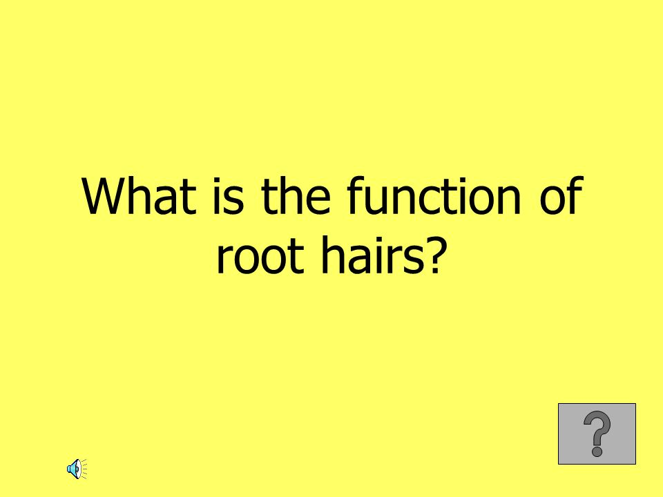 What is the function of root hairs