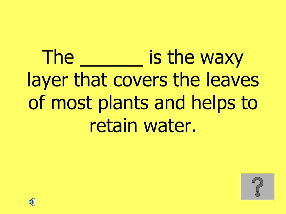 The ______ is the waxy layer that covers the leaves of most plants and helps to retain water.
