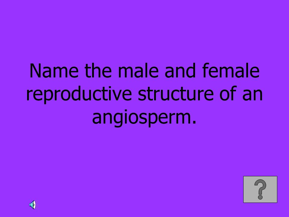 Name the male and female reproductive structure of an angiosperm.