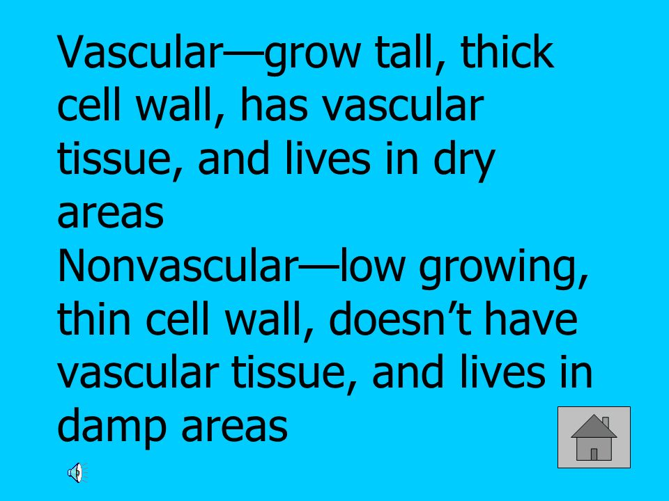 Vascular—grow tall, thick cell wall, has vascular tissue, and lives in dry areas Nonvascular—low growing, thin cell wall, doesn't have vascular tissue, and lives in damp areas