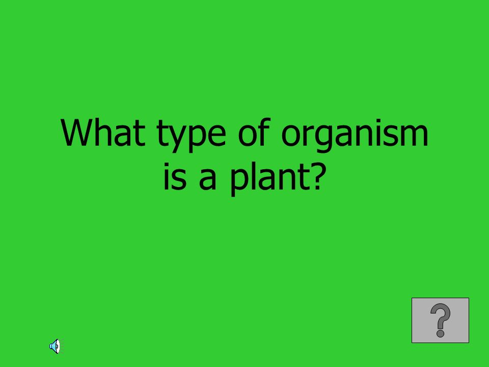 What type of organism is a plant