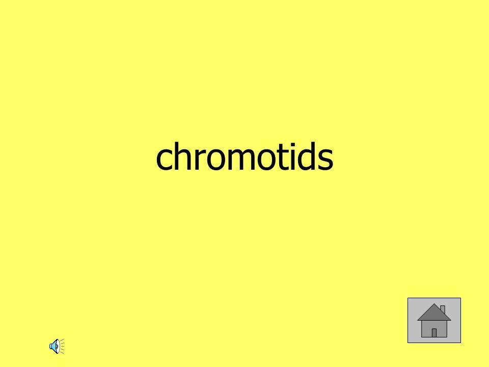 chromotids