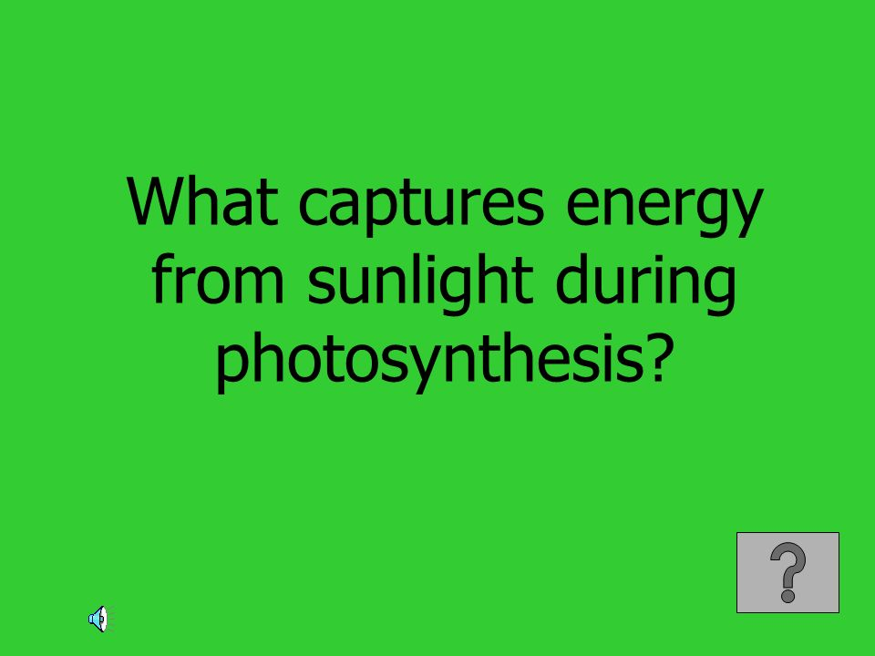 What captures energy from sunlight during photosynthesis