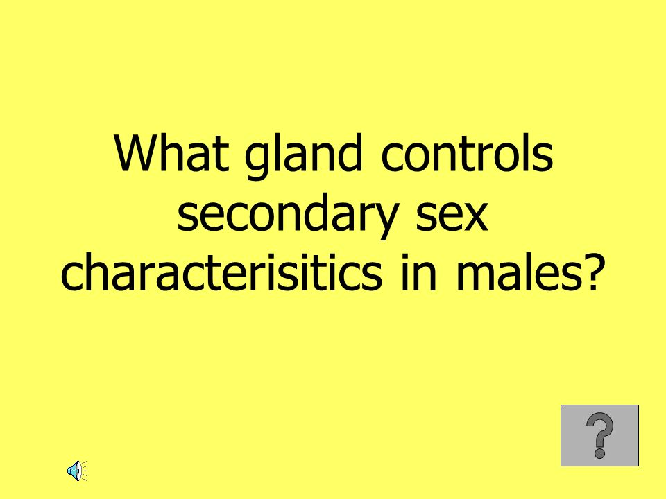 What gland controls secondary sex characterisitics in males