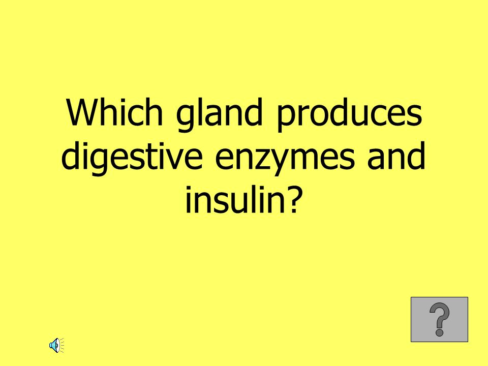 Which gland produces digestive enzymes and insulin