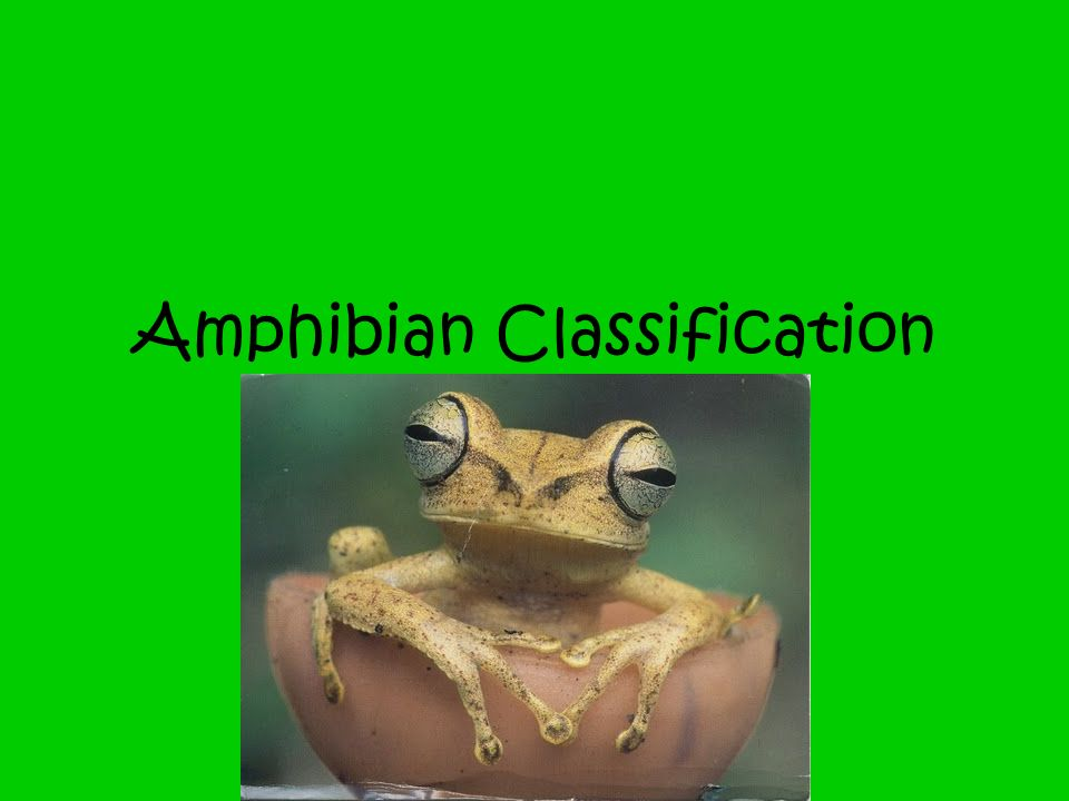 Amphibian Classification