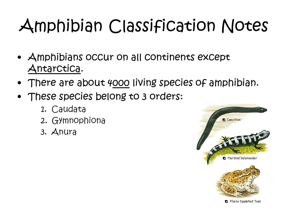 Amphibian Classification Notes