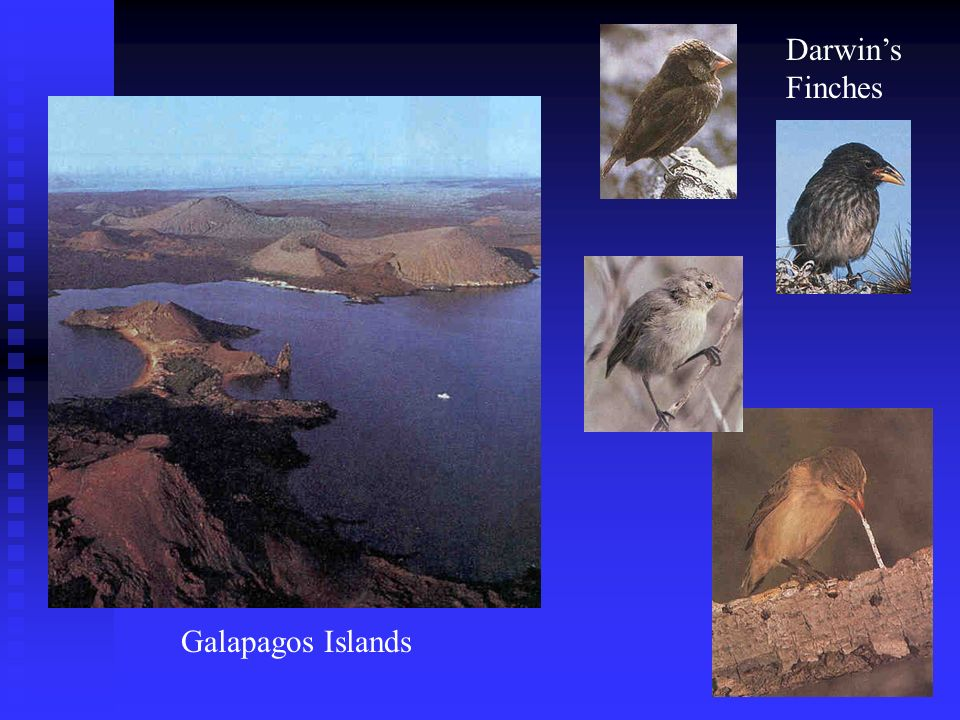 Darwin's Finches Galapagos Islands