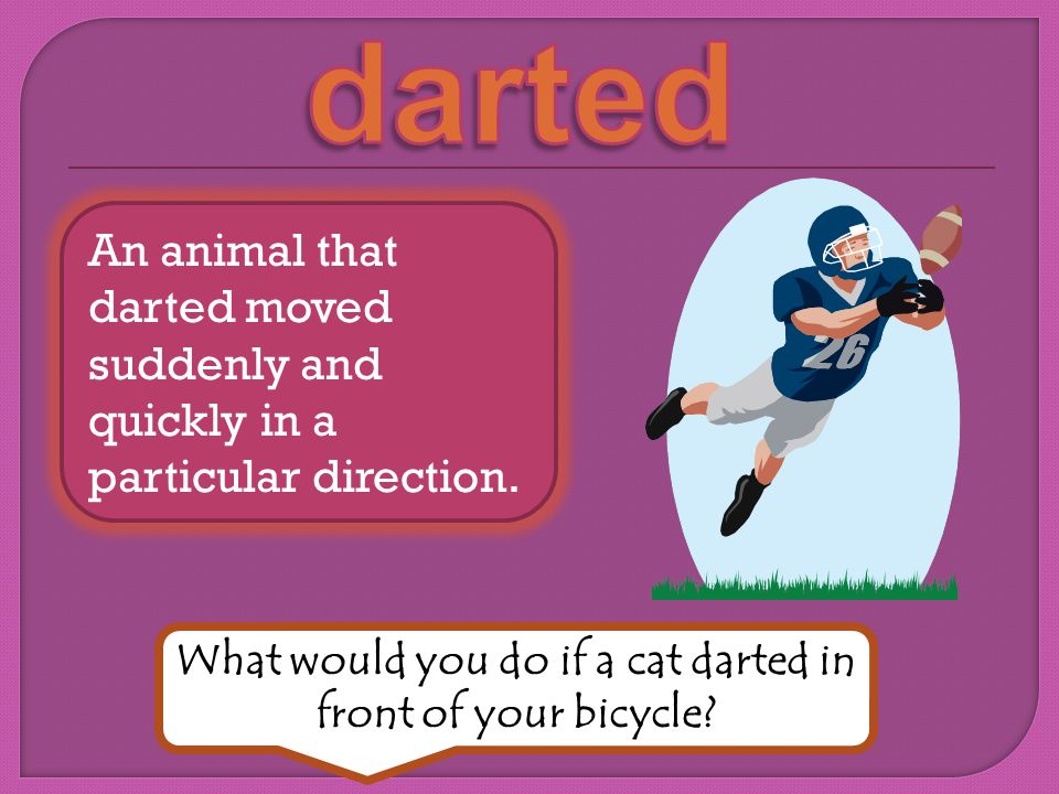 What would you do if a cat darted in front of your bicycle