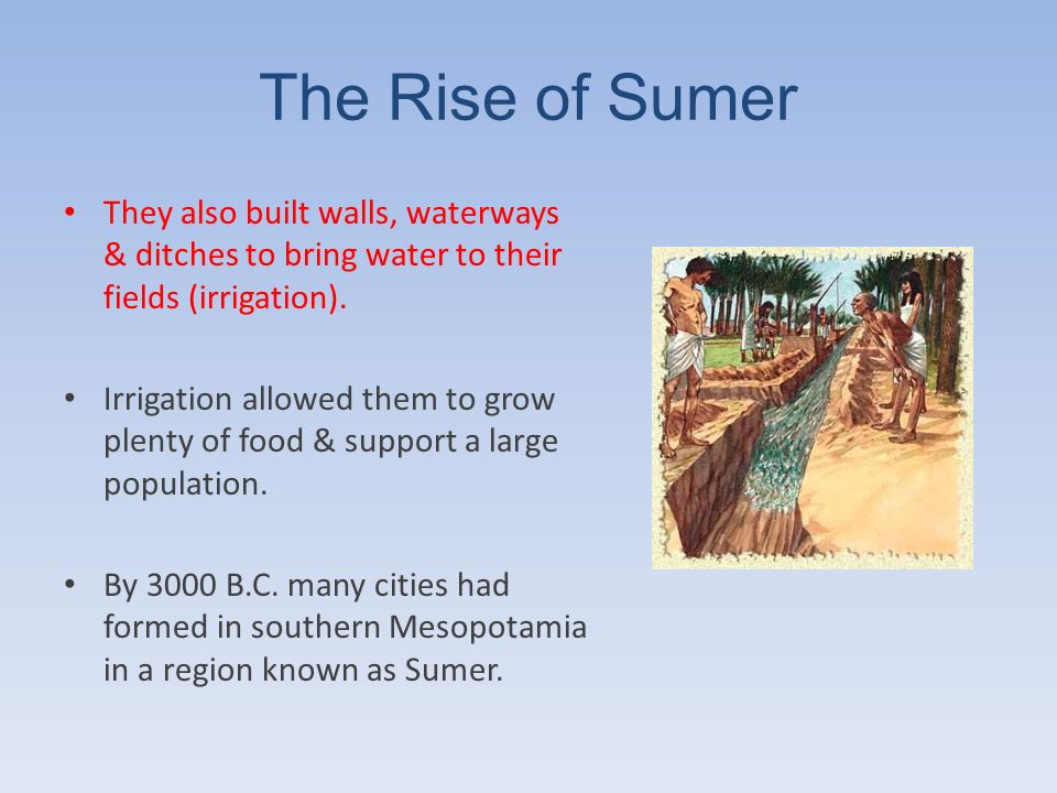 The Rise of Sumer They also built walls, waterways & ditches to bring water to their fields (irrigation).