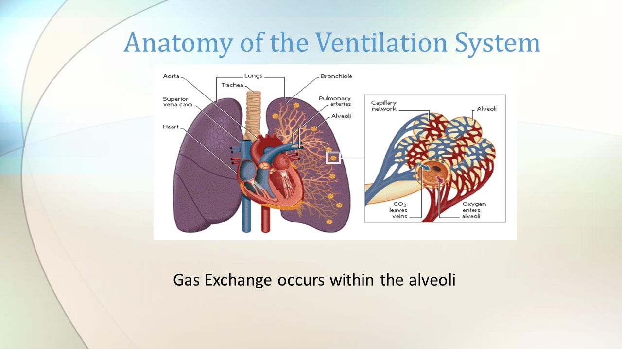 gas exchange. - ppt download