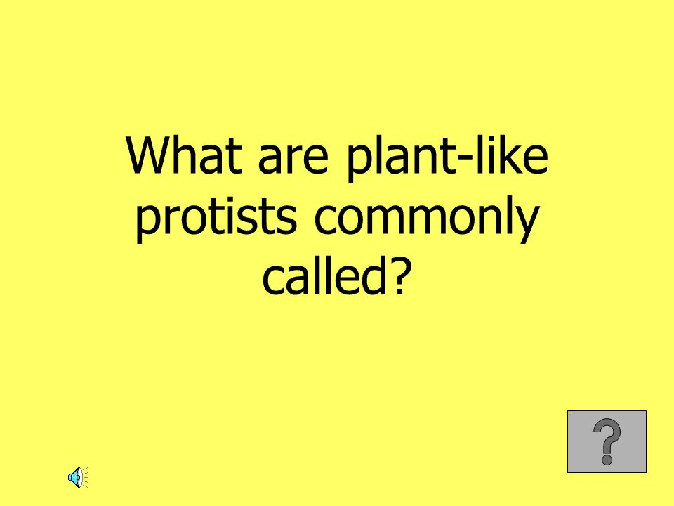What are plant-like protists commonly called