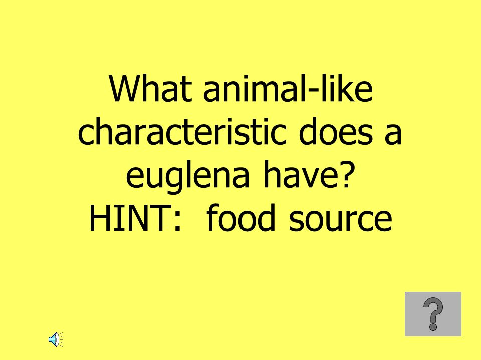 What animal-like characteristic does a euglena have HINT: food source