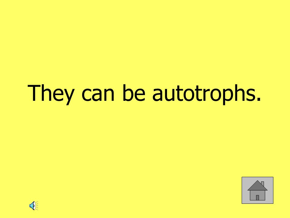 They can be autotrophs.