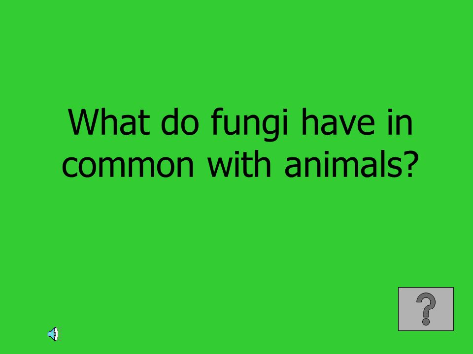 What do fungi have in common with animals