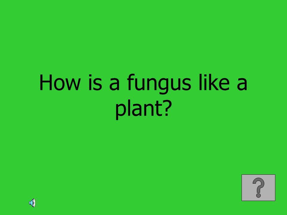 How is a fungus like a plant