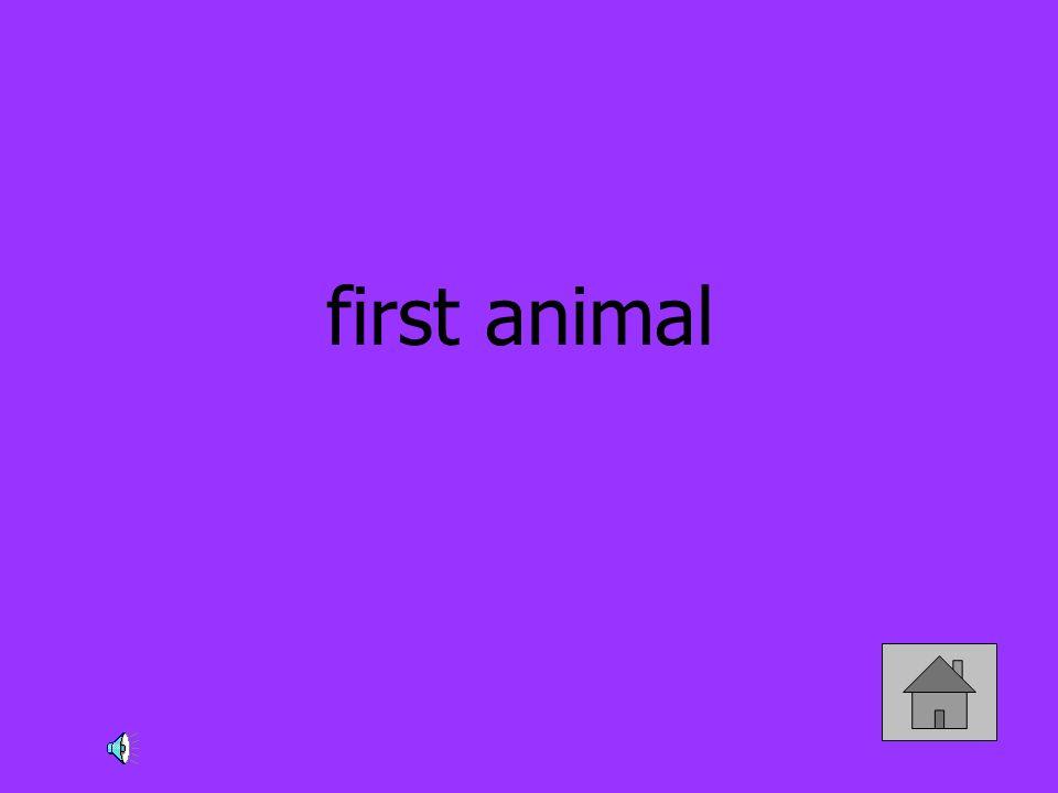 first animal