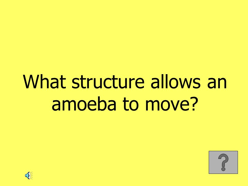 What structure allows an amoeba to move