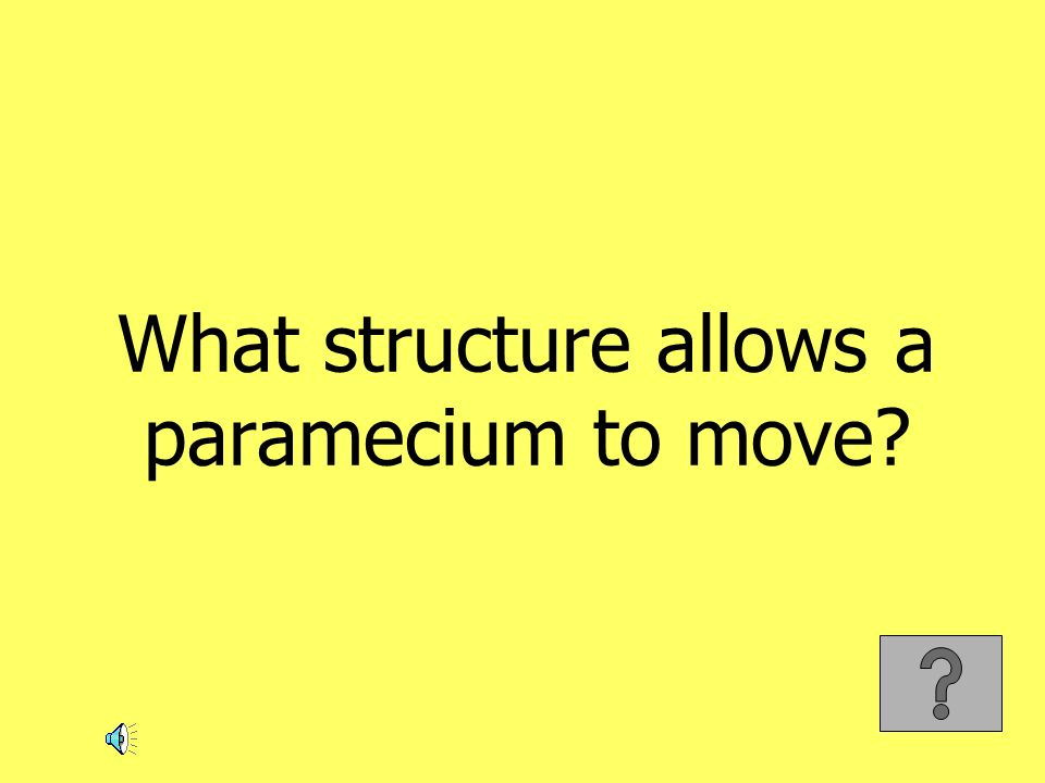 What structure allows a paramecium to move