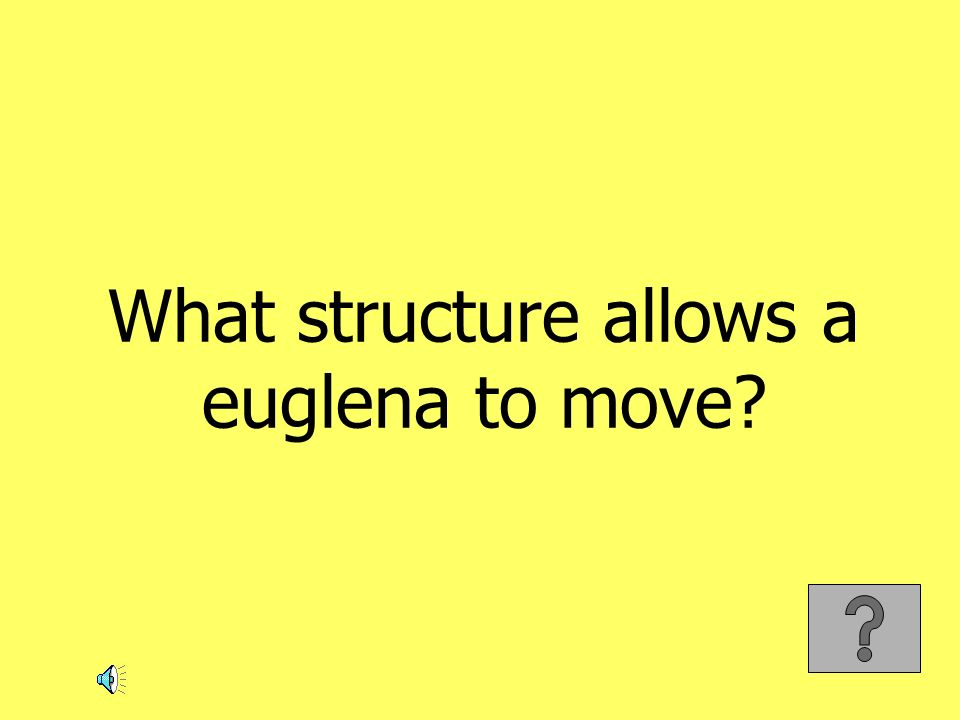 What structure allows a euglena to move