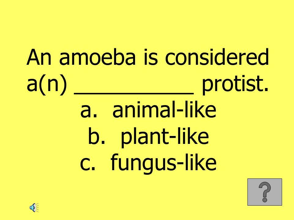 An amoeba is considered a(n) __________ protist. a. animal-like b