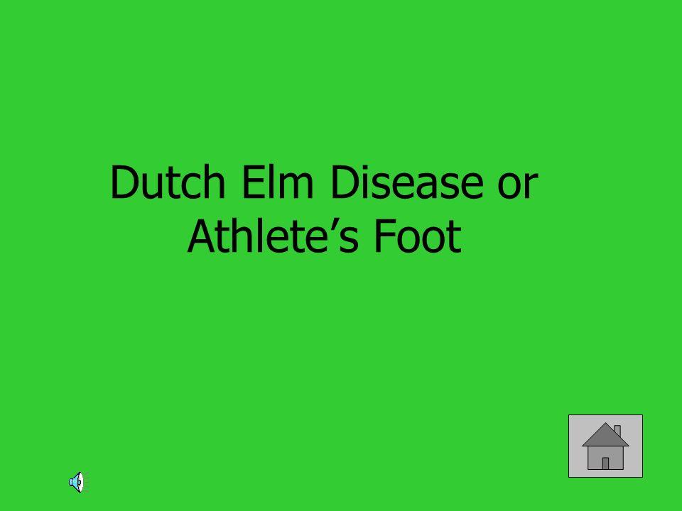 Dutch Elm Disease or Athlete's Foot