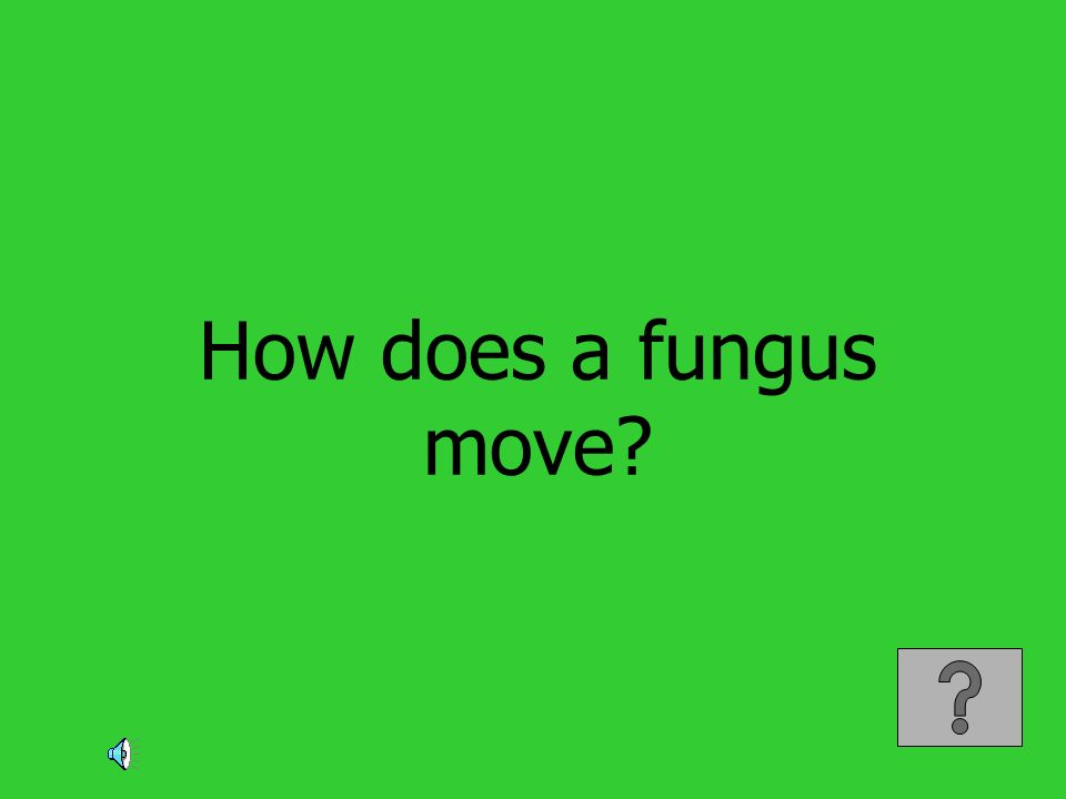 How does a fungus move