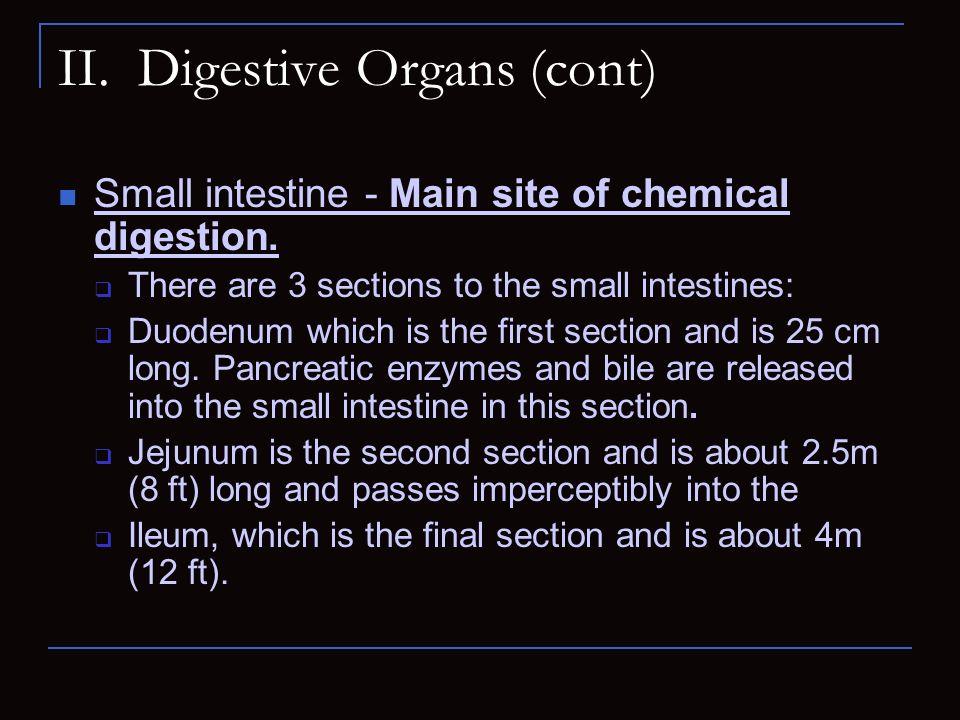 II. Digestive Organs (cont)