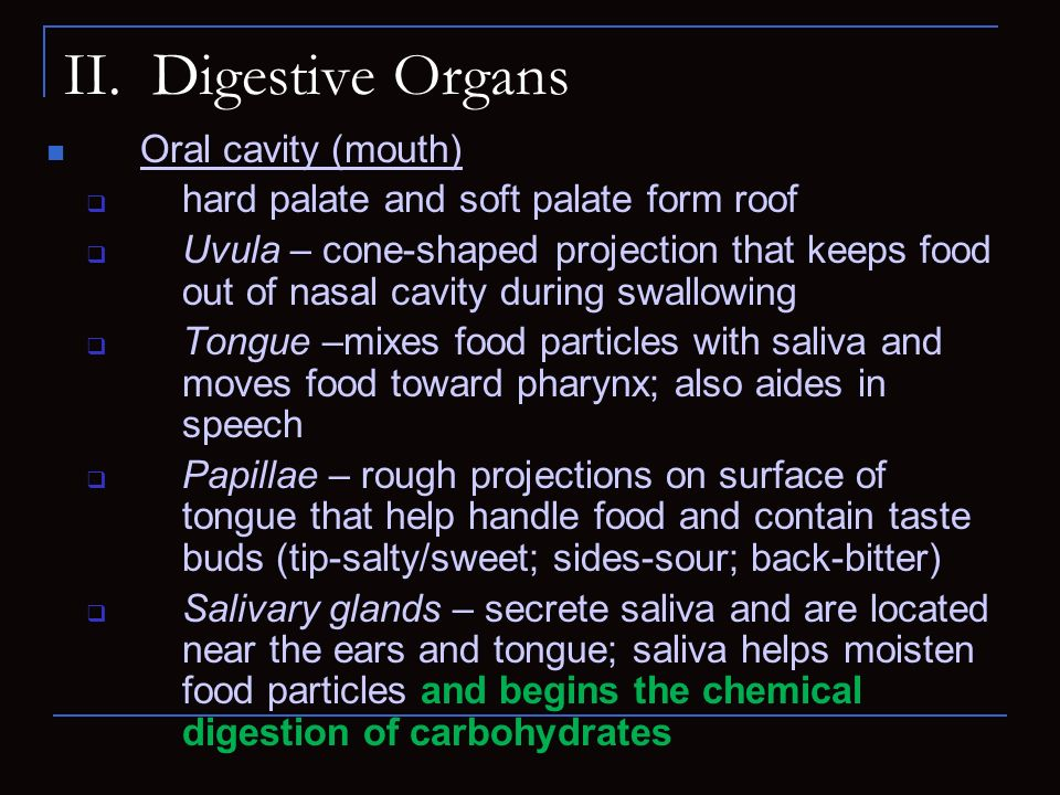 II. Digestive Organs Oral cavity (mouth)