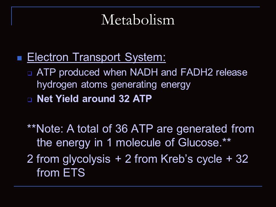 Metabolism Electron Transport System: