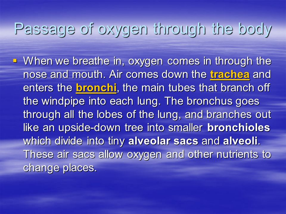 Passage of oxygen through the body